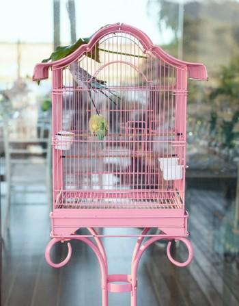 bird_cage_01